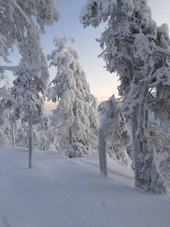 Ruka 2020 trees